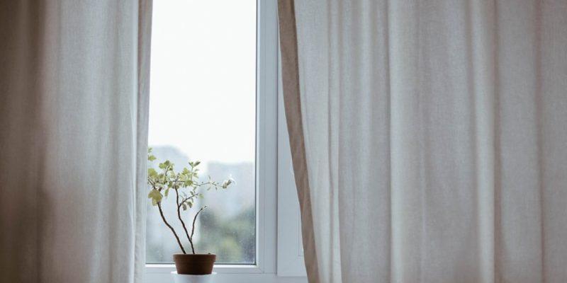 Plant on a window ledge
